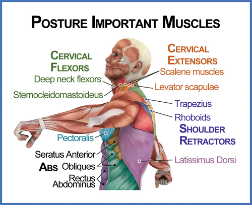 posture-important-muscles